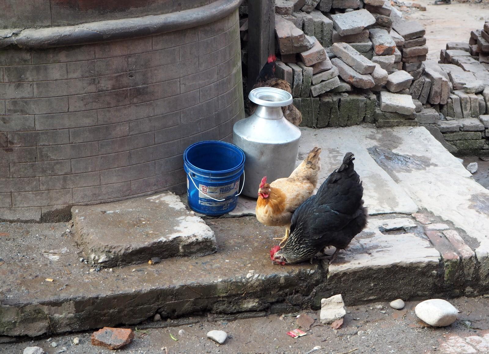 Nepal Bhaktapur jälleenrakennusta