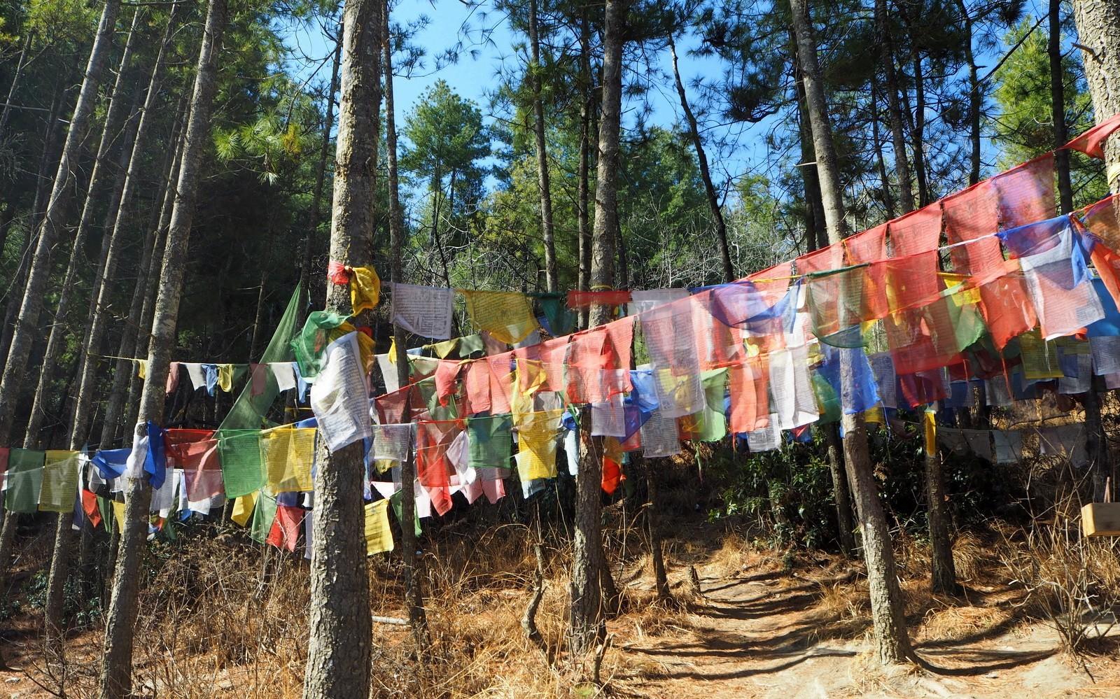 Thimphu buddha forest