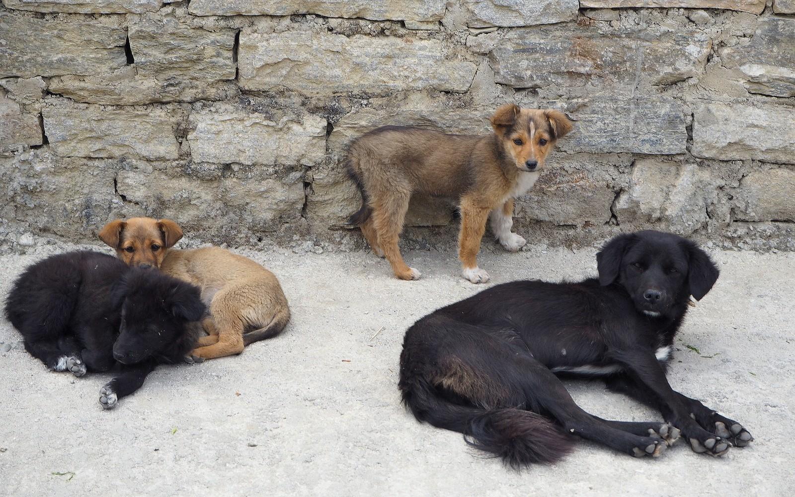Kulkukoiria Bhutanissa
