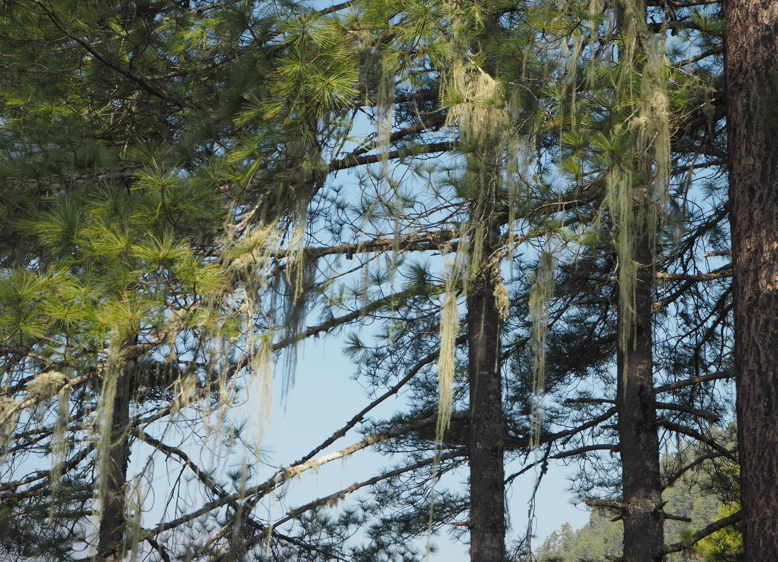 Tiikerinpesä Tiger's Nest metsää