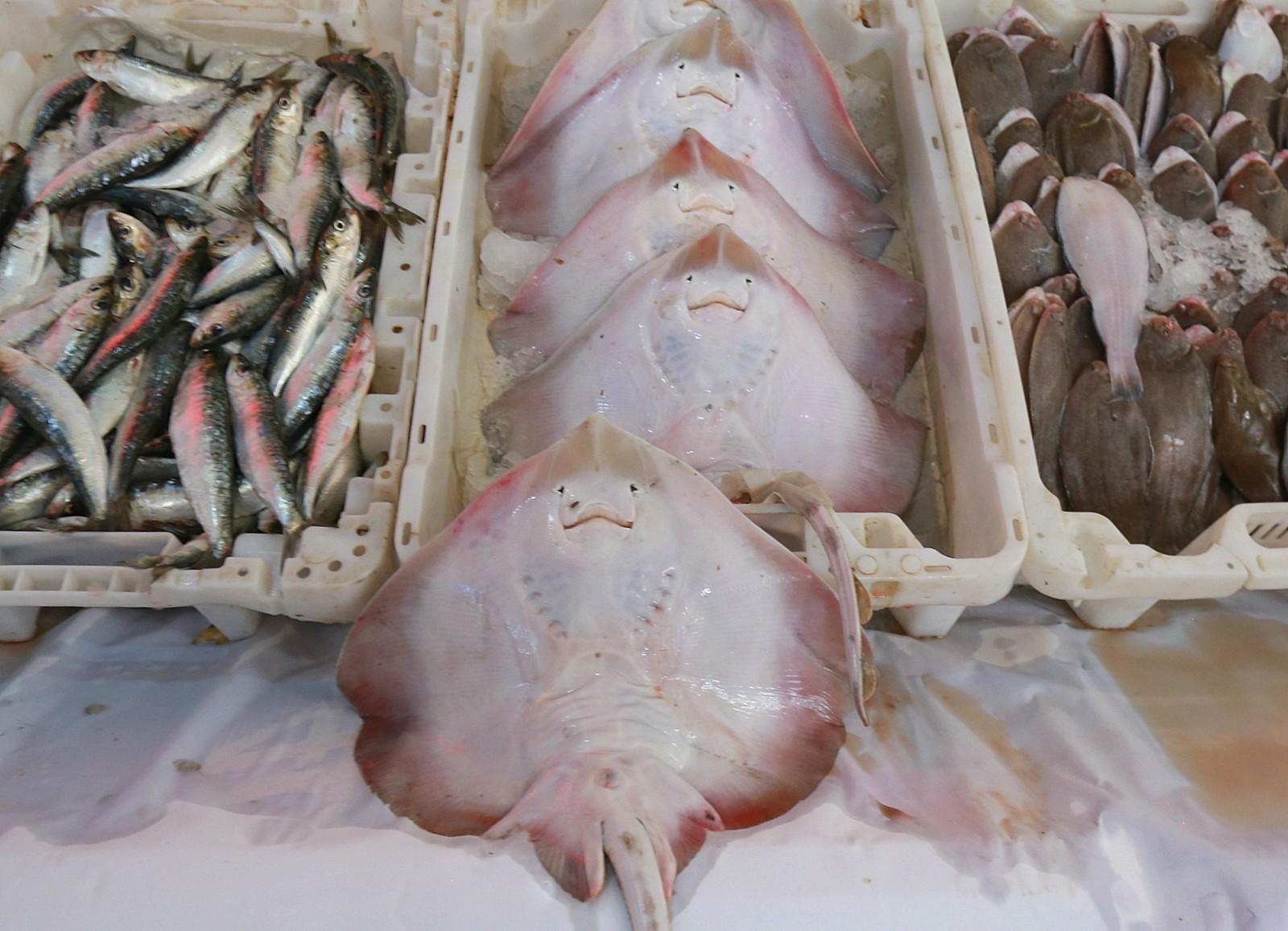 Casablanca fish market
