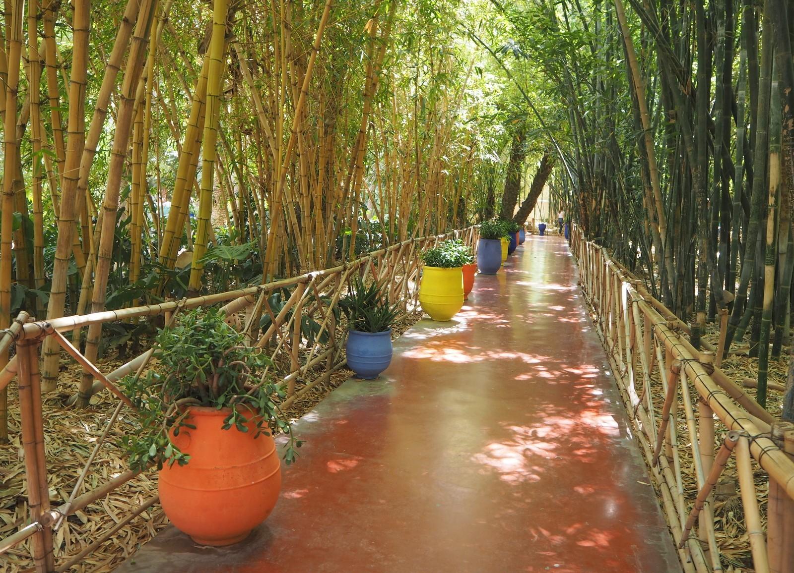 Jardin Majorelle Marrakeshissa