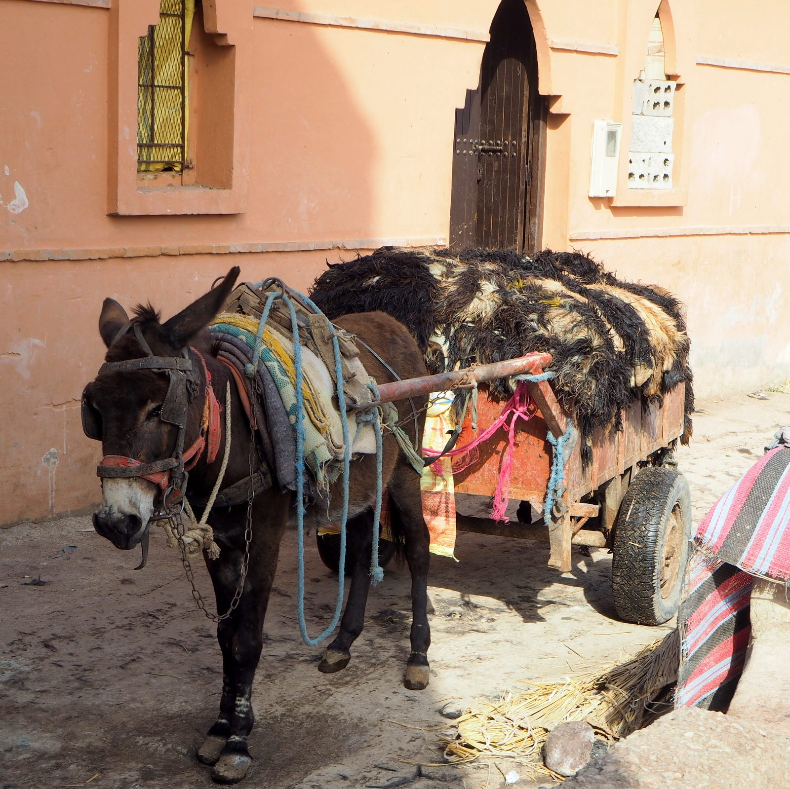 Marrakesh medinaTannery