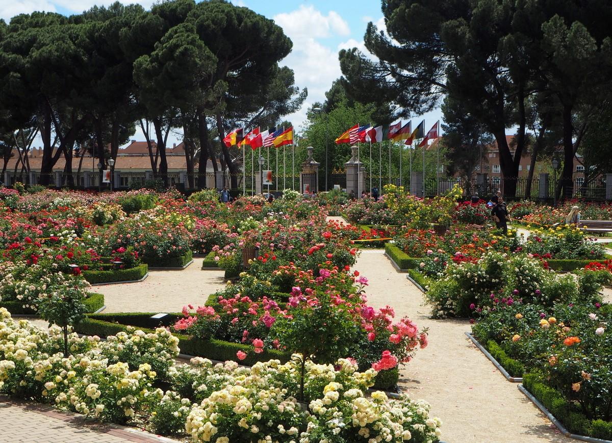 Madrid Parque de Oeste rosegarden
