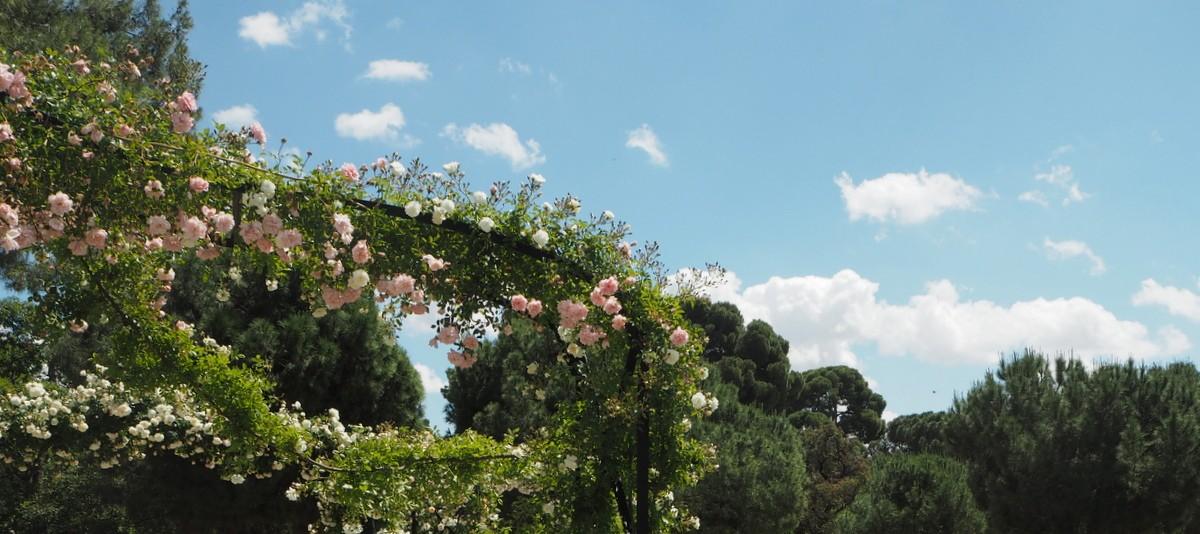 Madrid ruusut feature