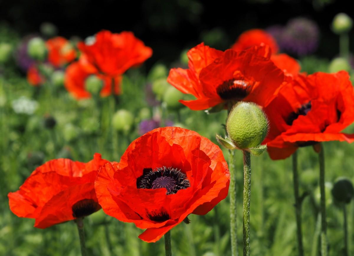 Planten un Blumen Hampuri