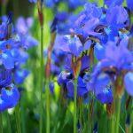 Planten un Blumen -puisto