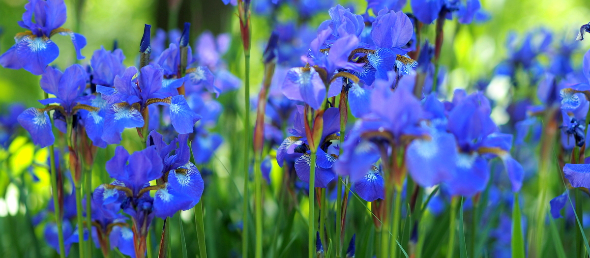 Planten un Blumen Hampuri feature