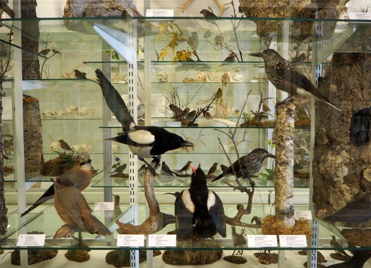 Kieppi Kokkolan luonnontieteellinen museo