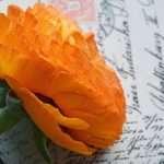 Kuukauden postikortti – Shetlanninsaaret