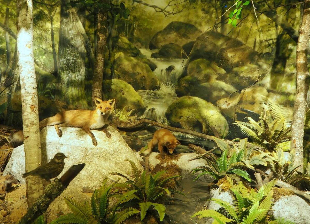 Vapriikki Luonnontieteellinen museo