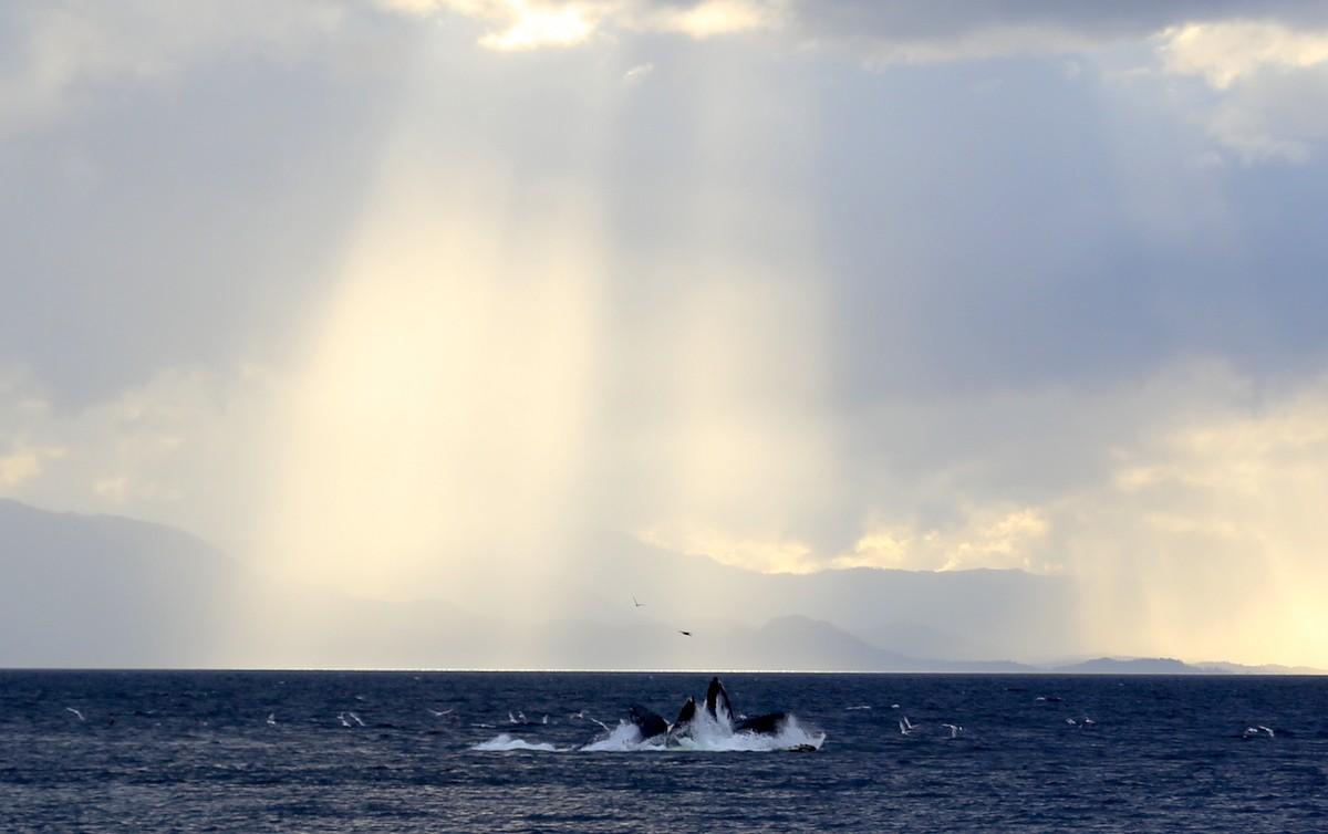 Valaita Ketchikan Alaska