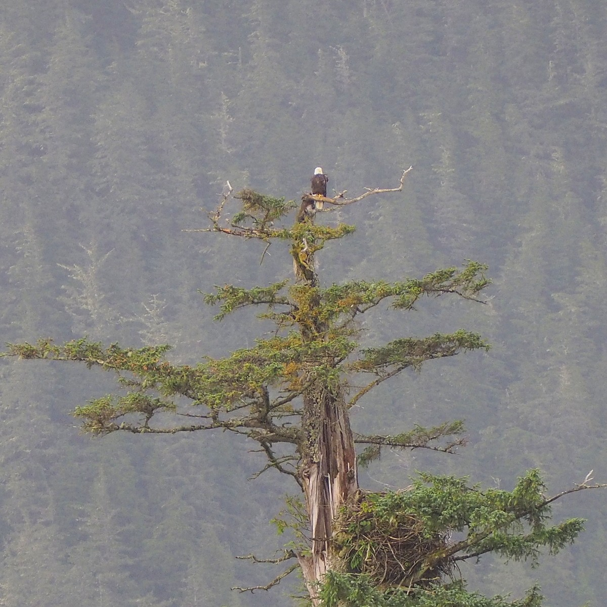 Kotkia Ketchikan Alaska
