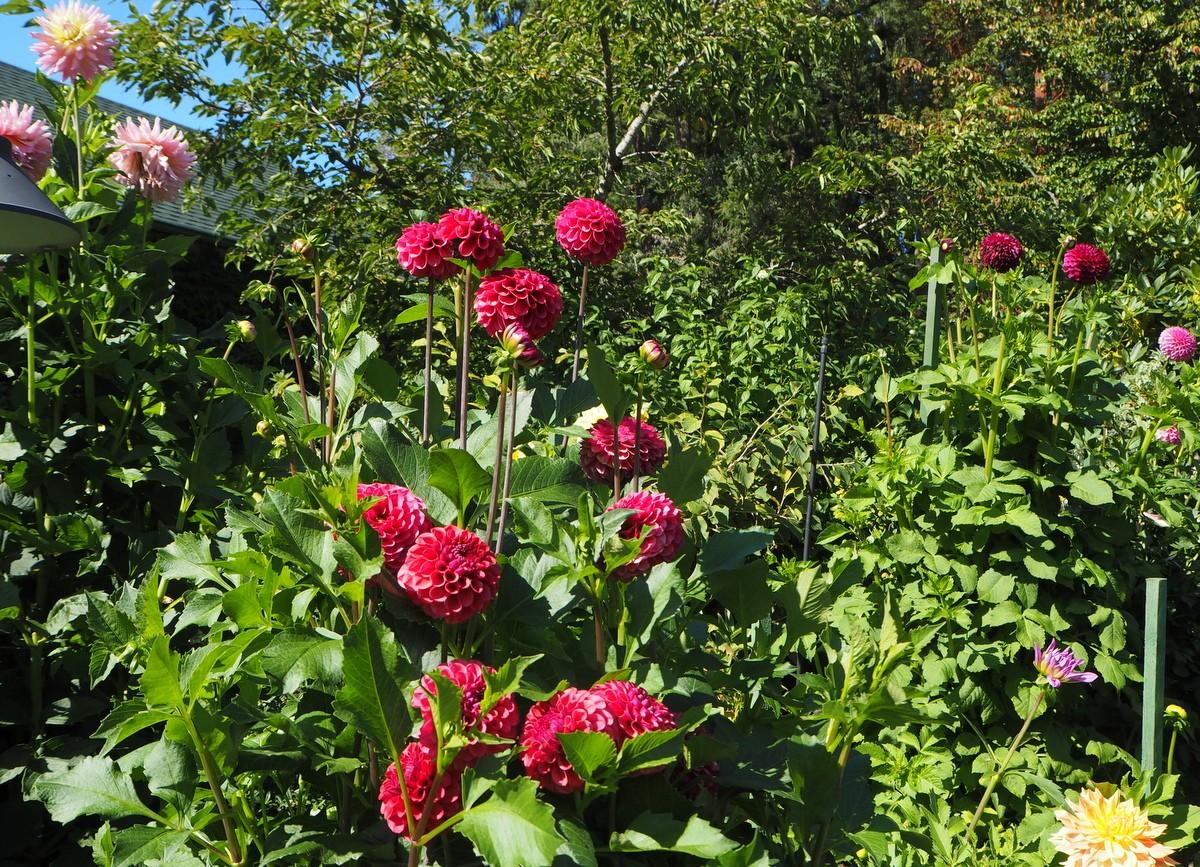Butchart Gardens Vancouver Island