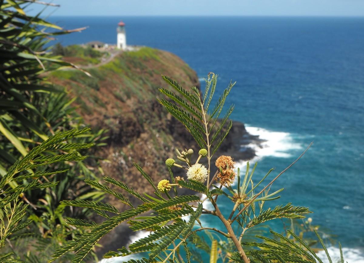 Kilauea lighthouse majakka Kauai Havaiji