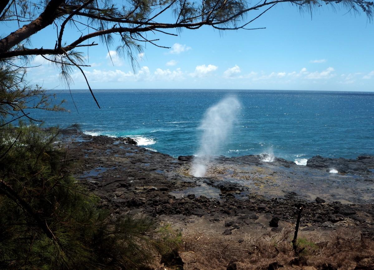 Kauai Spounting Horn