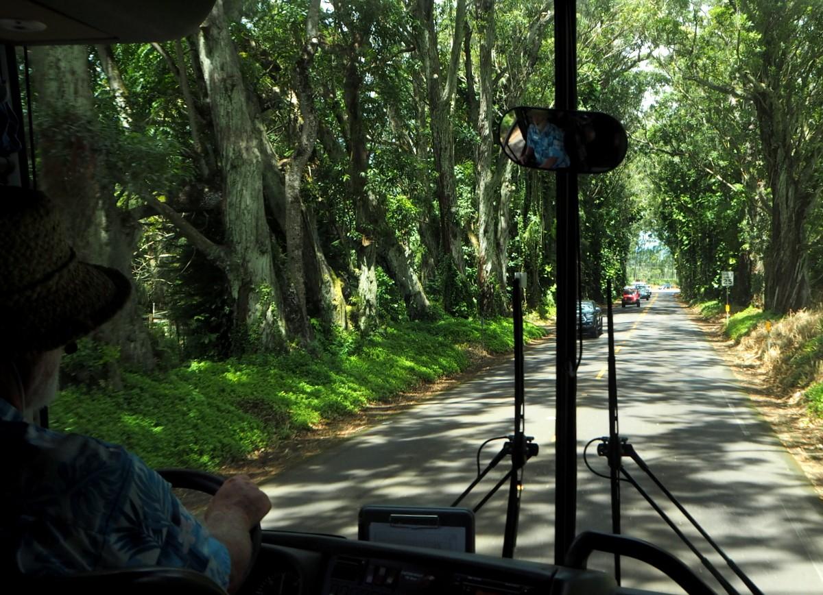 Kauai Tree Tunnel Road