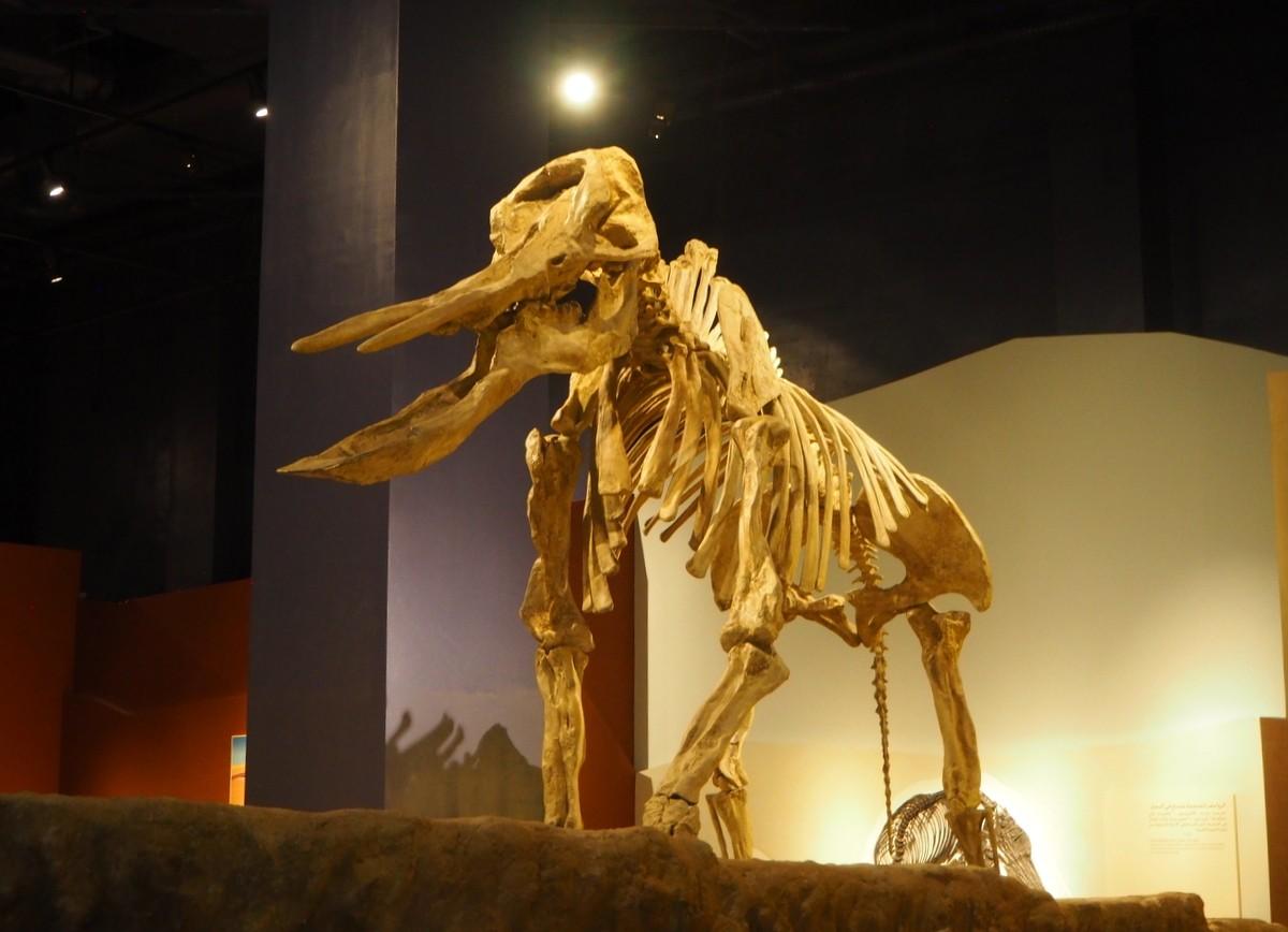 Riad National Museum Saudi Arabia