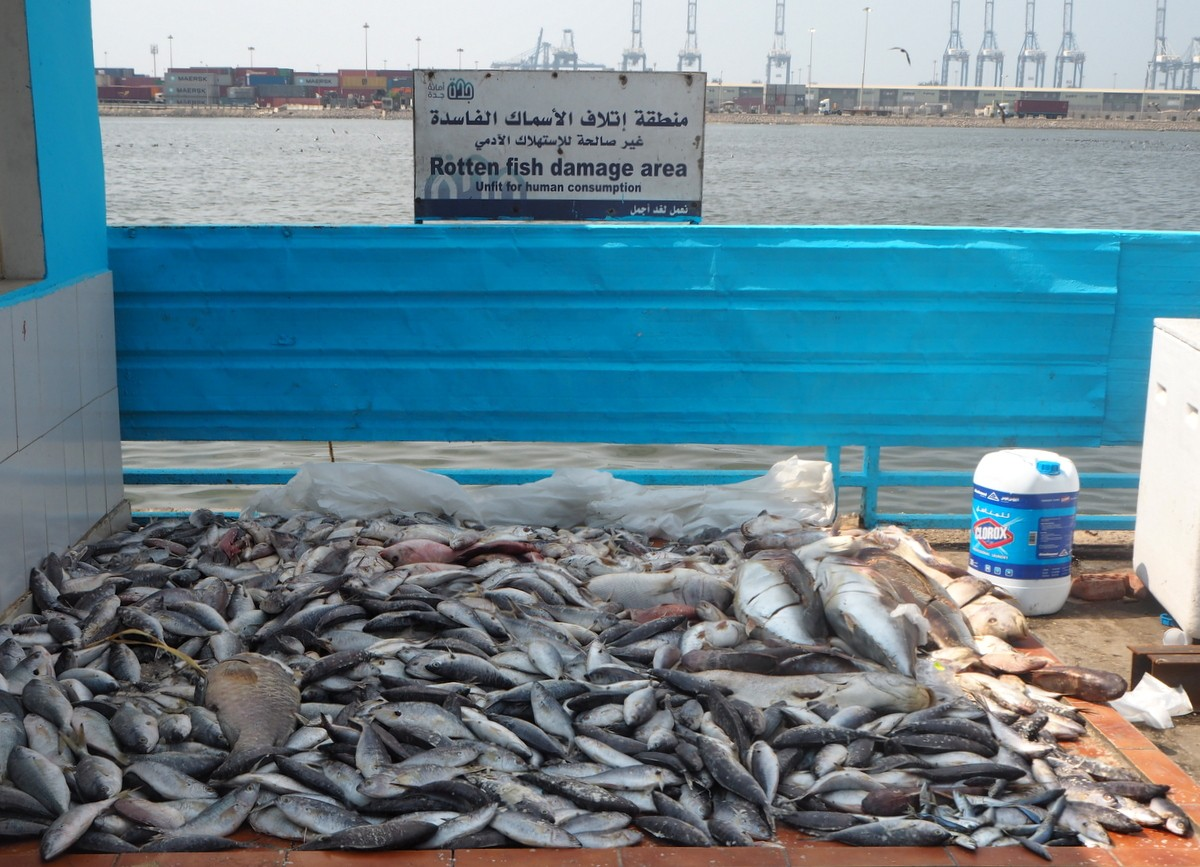 Jedda kalatori Punaisenmeren rannalla