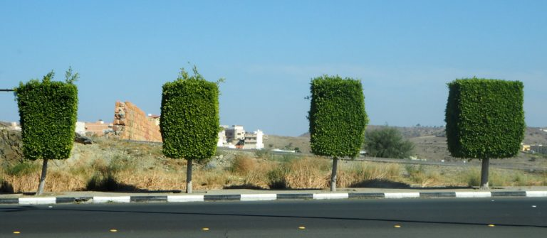 Taif feature