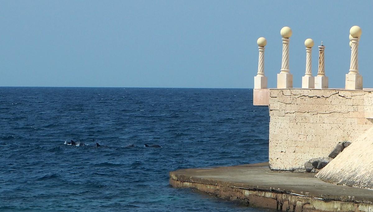 Delfiinejä Punainenmeri Jeddah