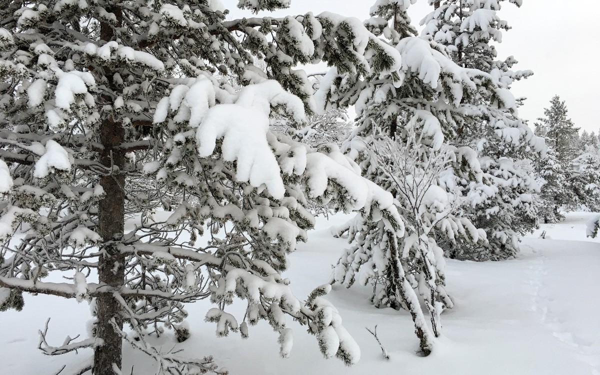 Kakslauttanen talvi
