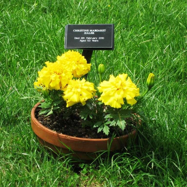 Chrisin hauta 2010