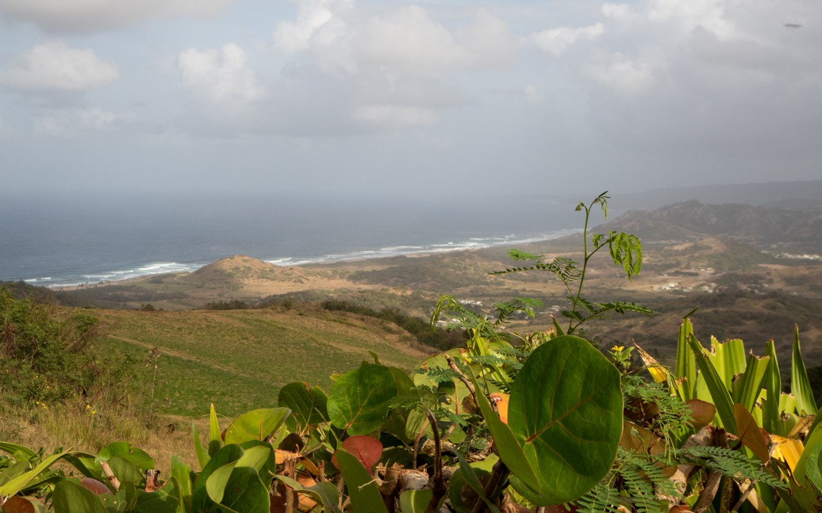 Barbados Mount Cherry Tree Hill