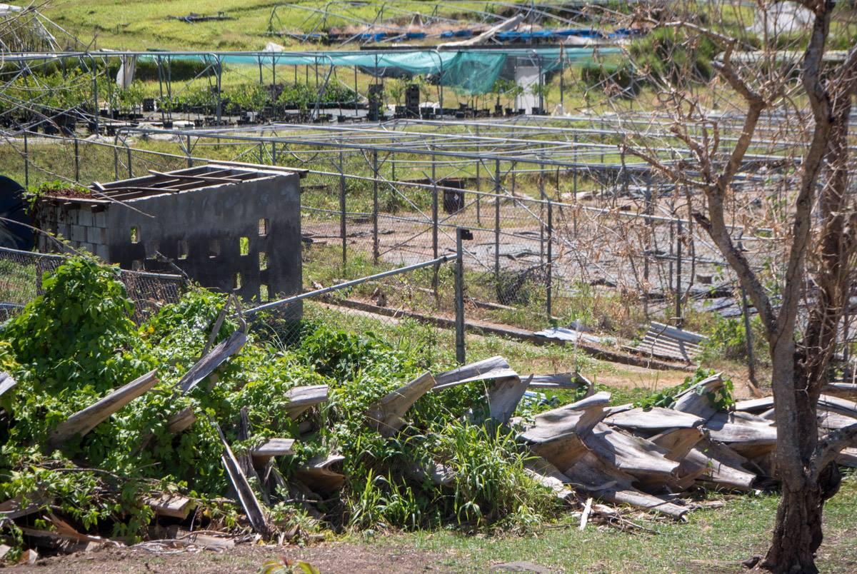 Dominica puutarha