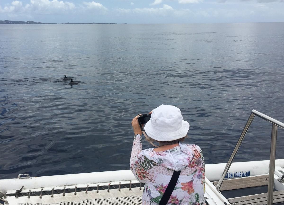 Grenada delfiiniretki