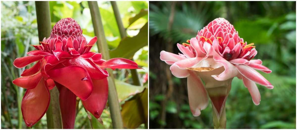 kasvitieteellinen puutarha Saint Lucia