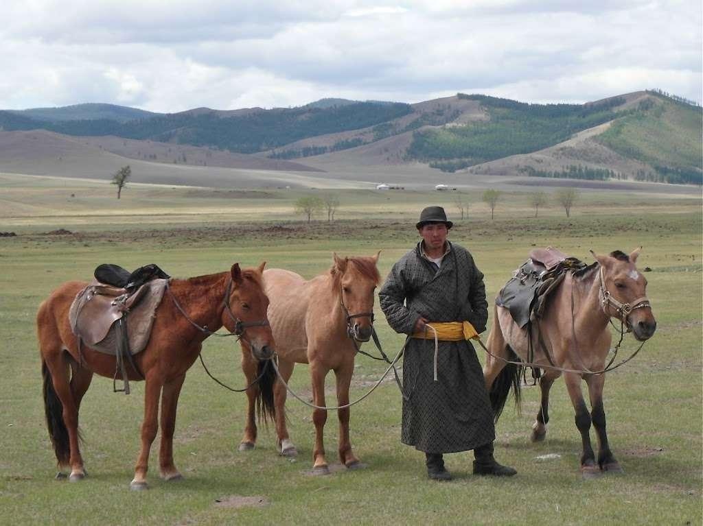 Mongolia hevoset