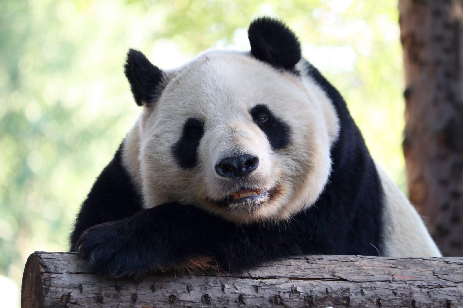 Peking Panda Peking - Ulan Bator - Moskova