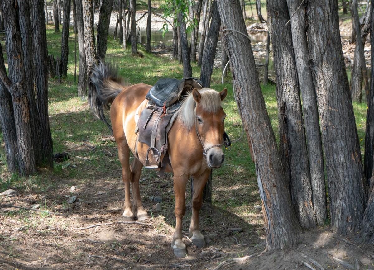 Terelj Mongolia