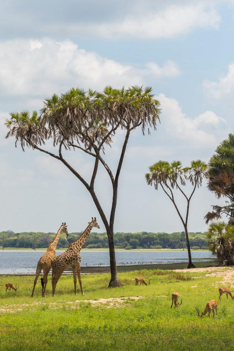 Tansania Vaihda vapaalle