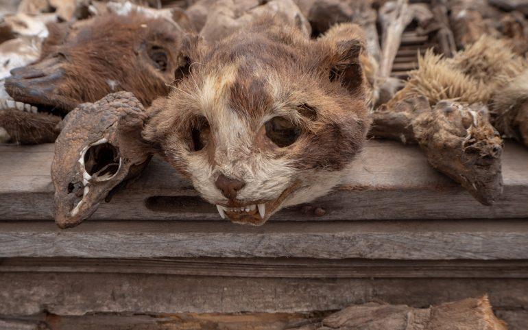 Togo Lome voodoo