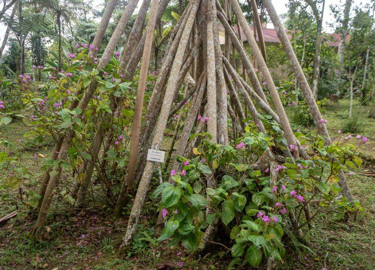 Sao Tome kasvitieteellinen puutarha