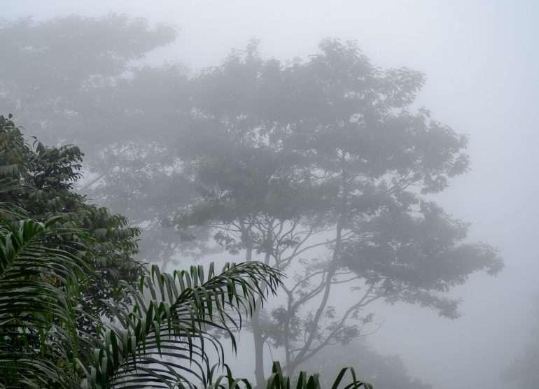 Sao Tome sademetsä