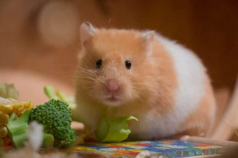 Hamsteri Ystäviä