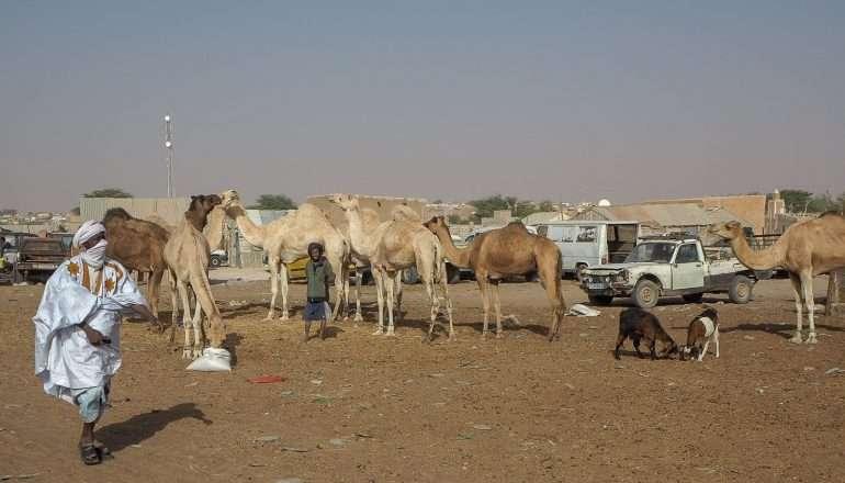 Mauritania kamelit