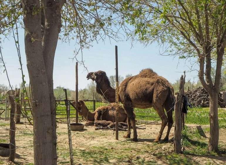 Darvaza kylävierailu