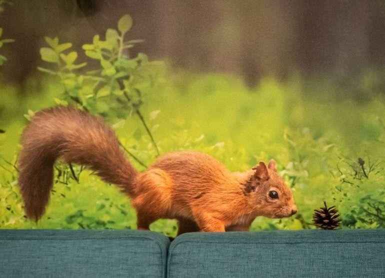 Hotel Sveitsi orava ja käpy