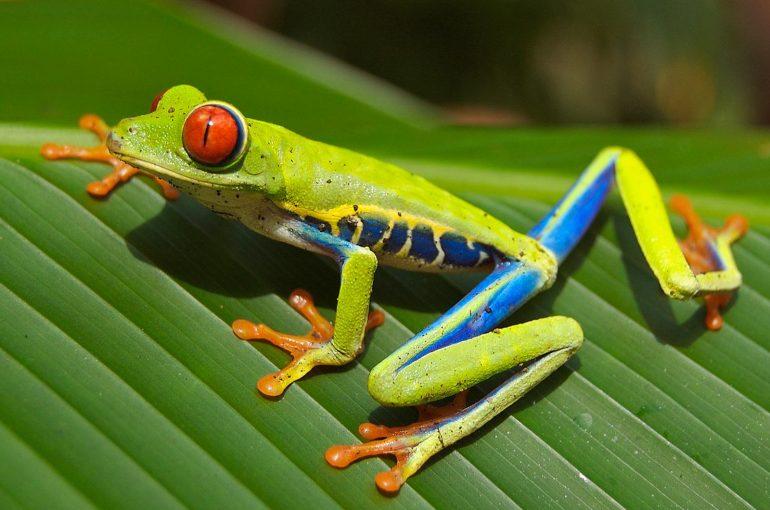 Syksy 2019 Costa Rica