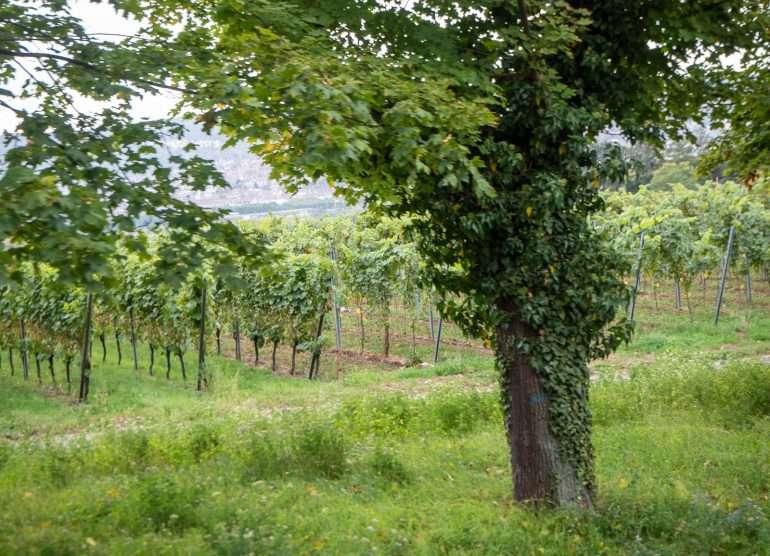 Viinitarhoja Stuttgart
