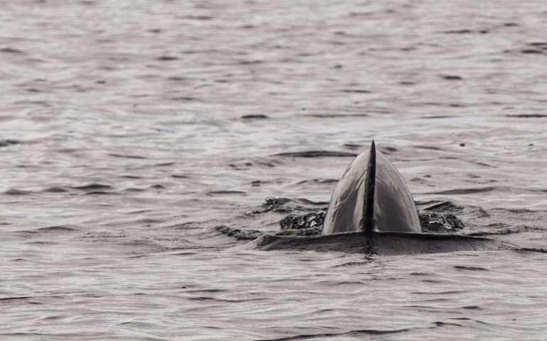 Delfiinit Bocas del Toro Panama