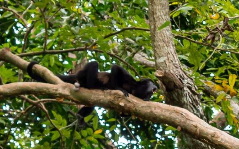 Monkey Island Gatun Panama