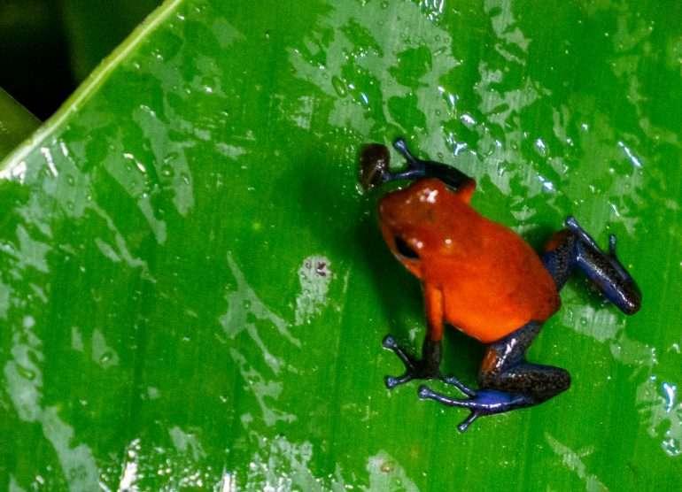 Los Lagos Costa Rica eläimiä