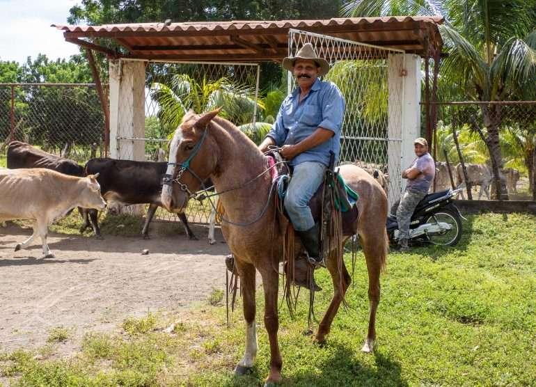 Lehmipaimen Nicaragua