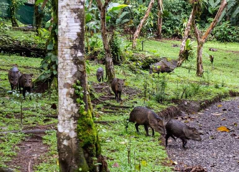 Mistico Arenal Costa Rica