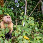 Eläimiä Panamassa